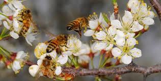 Bees gathering nectar