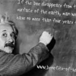 Einstein and bees